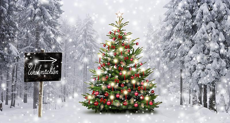 Tipps und Tricks rund um den Weihnachtsbaum | WCG